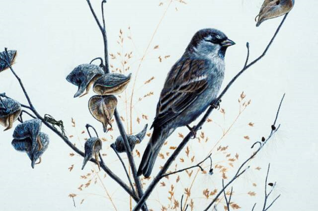 If memories were sparrows…..playing with poetry
