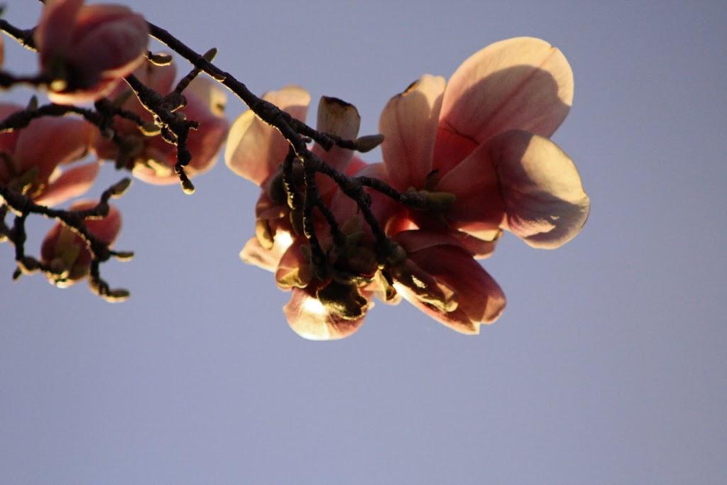 Random Acts of Poetry:  Petals