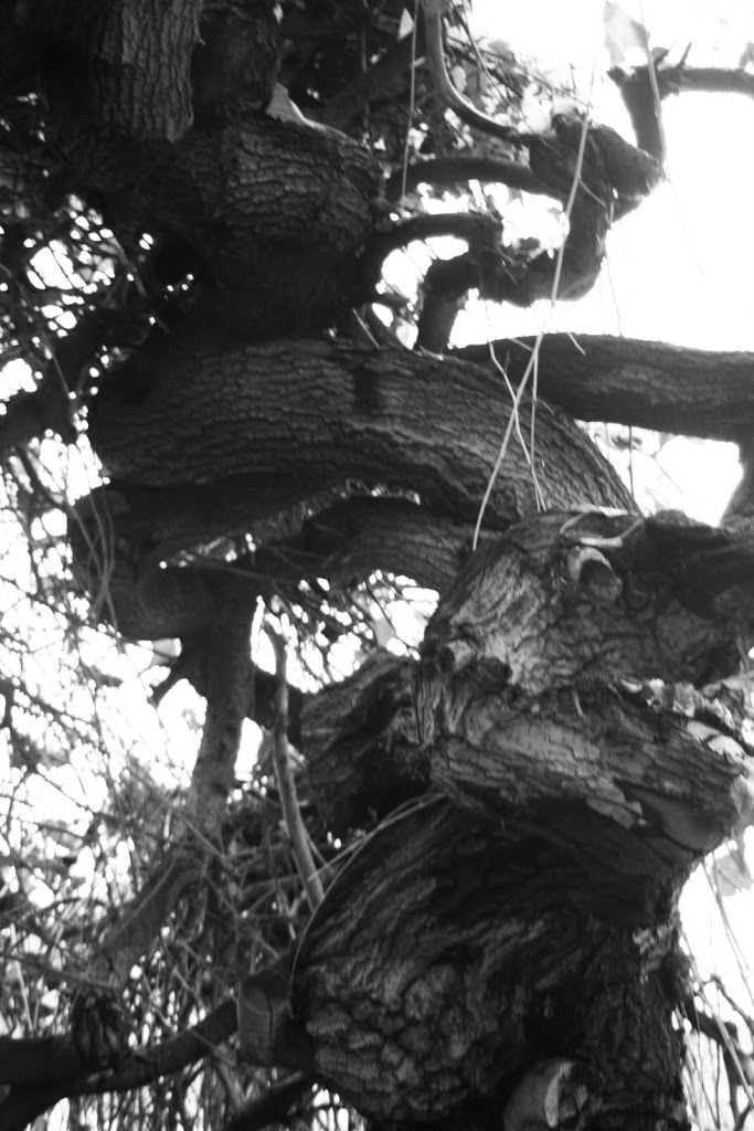 twistedtree